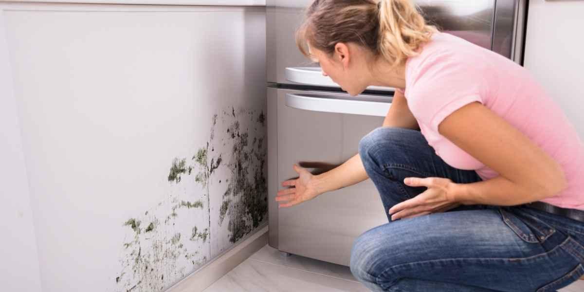 עובש ליד המקרר במטבח